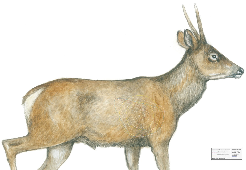 Kronhjort sida utan ben 42×64 cm